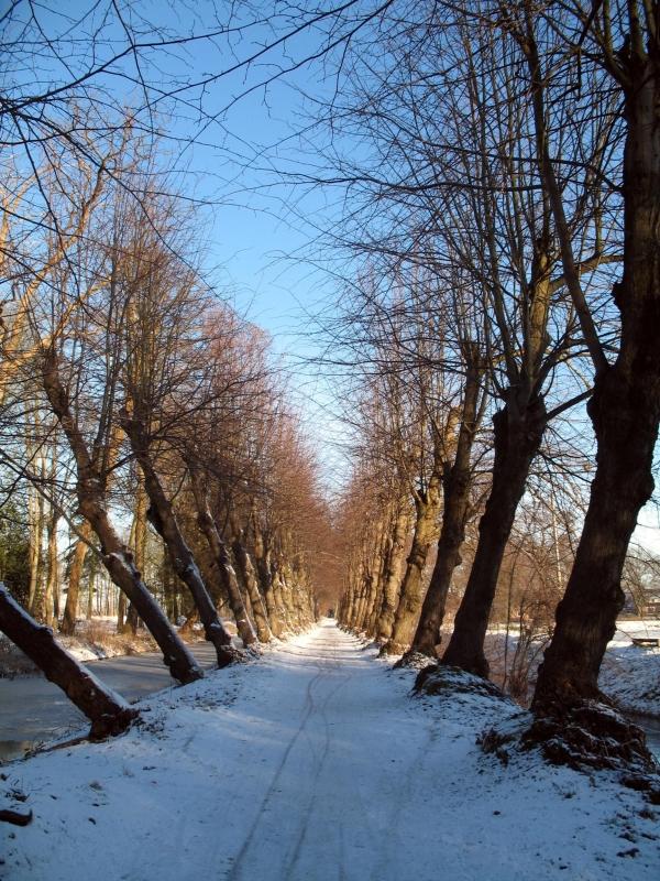 VaassenTrees